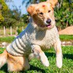 Suéter de Tricô Luxo com Fio Amiga